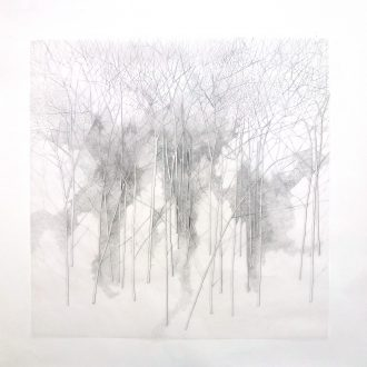 <strong>arboretum1 pencil on tracing paper77x77cms</strong>,